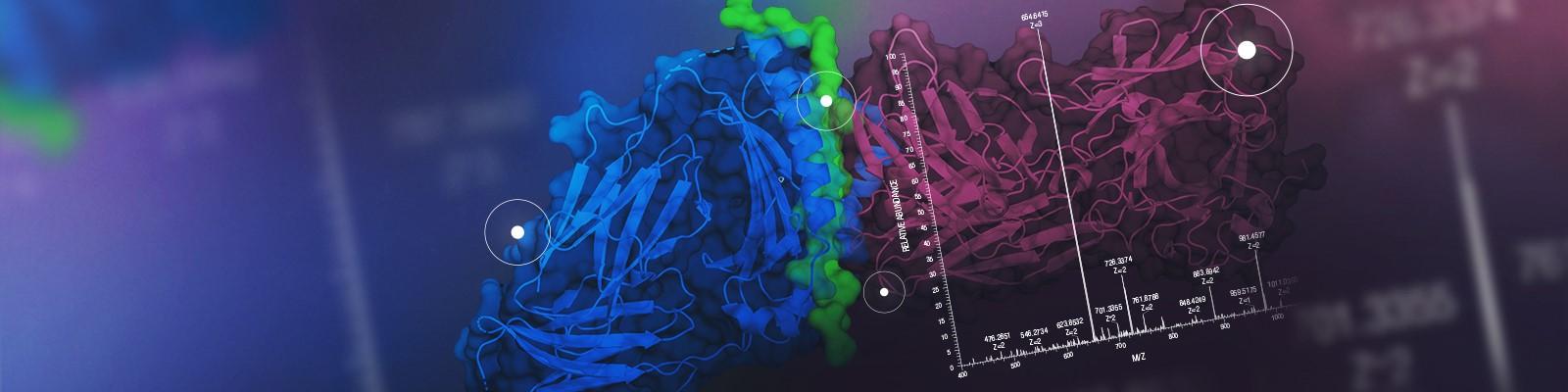 Antigen Presentation , A critical step for development of immune therapies
