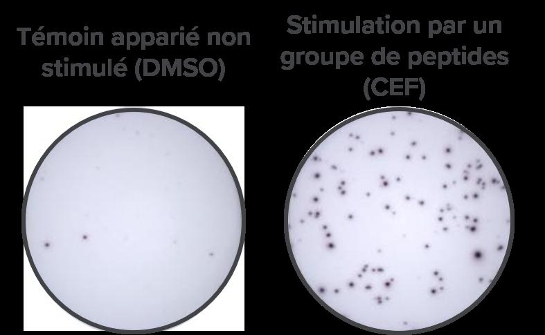 ELISpot data-fr